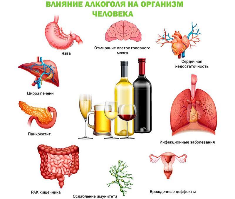 На какие органы влияет употребление алкоголя